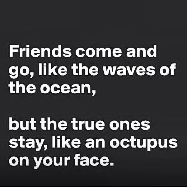 octopus-friends